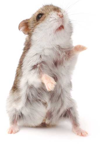 image of hamster for blog Thriving in the Eye of The Hurricane: Creative insight, transformation, and change is within.